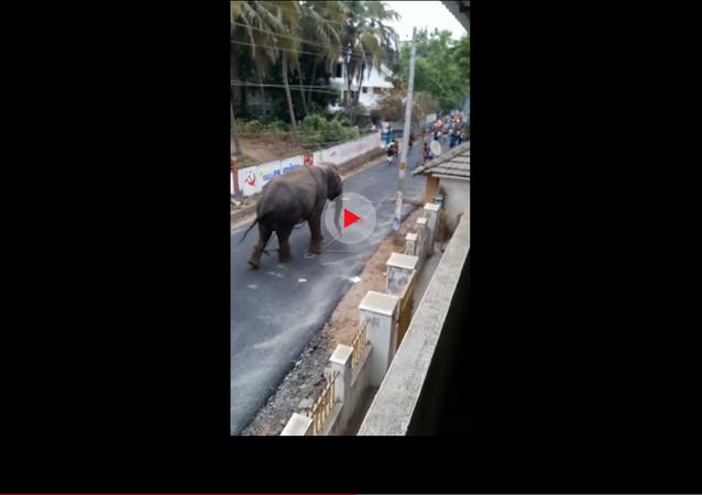 فيل يهاجم قرية