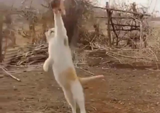 قطة تصطاد طائرا بمهارة فائقة