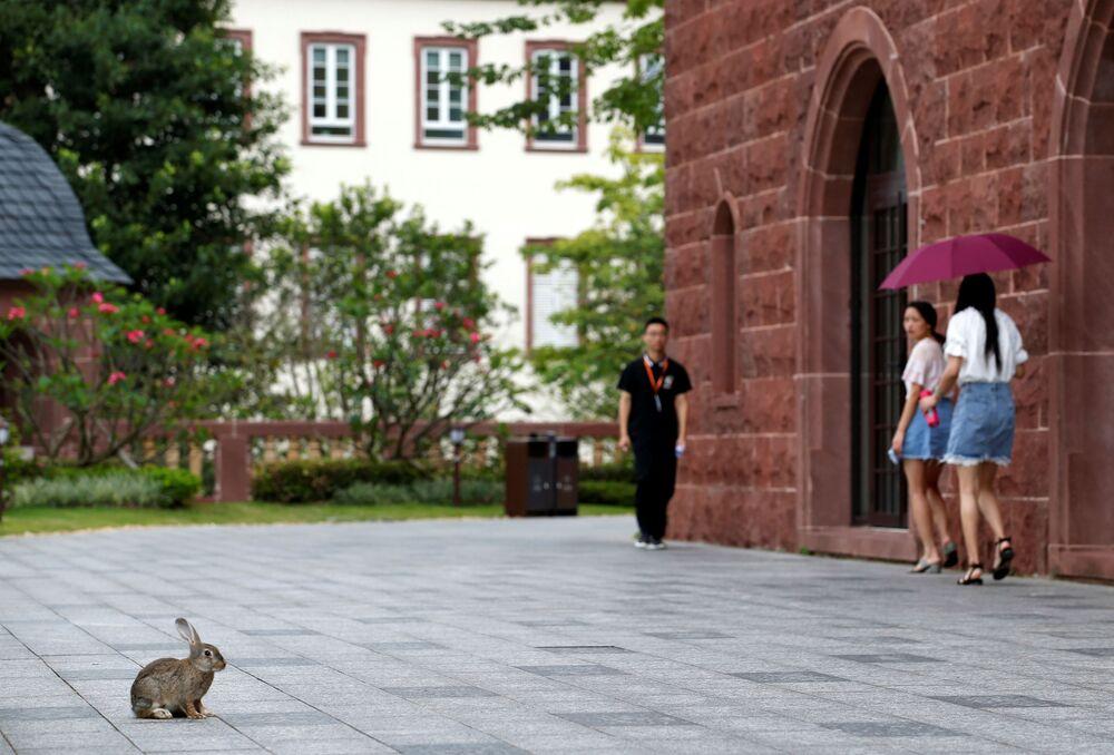 أرنب صغير في حرم شركة هواوي ، الحرم الجديد لـ هواوي سونغشان ليك نيو كامبوس (Huawei Songshan Lake New Campus)، 31 مايو/ أيار  2019