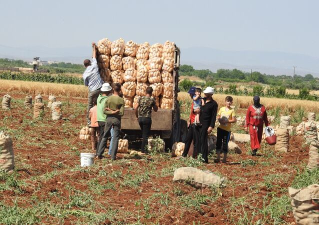 بلدة خطّاب تحاذي خطوط التماس شمال حماة وتنتج أفضل أنواع البطاطا بالعالم