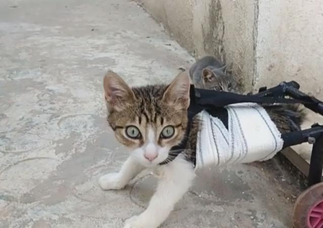 شاب تونسي يعيد الأمل لقطة مبتورة الساقين