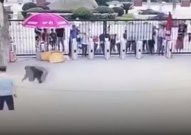 شمبانزي يهرب من حديقة حيوان