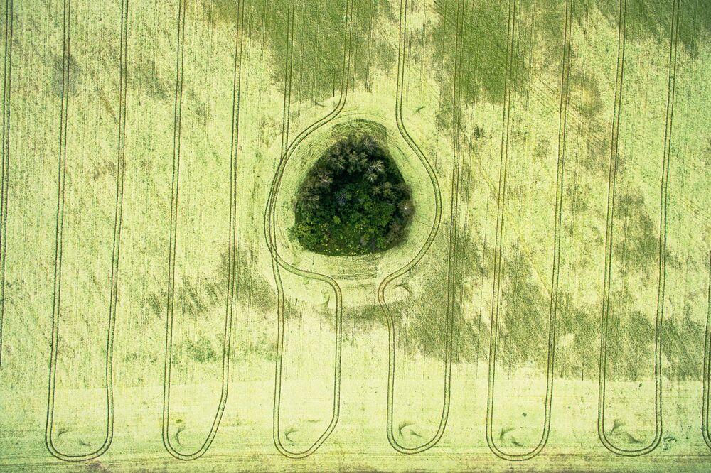 حقول مزهرة في منطقة اسكيتيمسك بمنطقة نوفوسيبيرسك الروسية