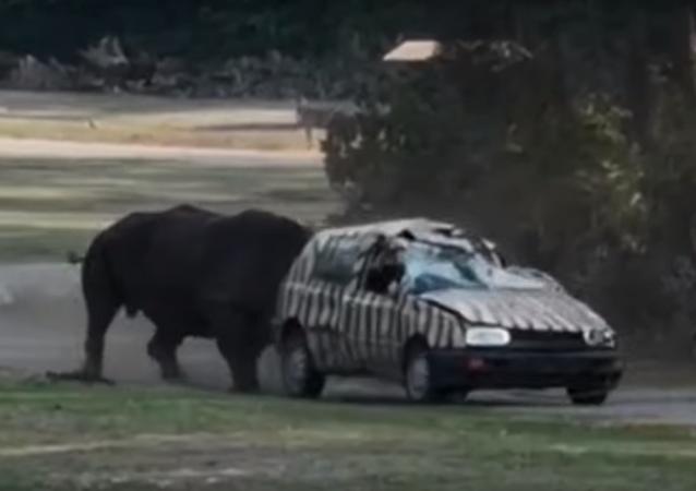 وحيد قرن يهاجم سيارة