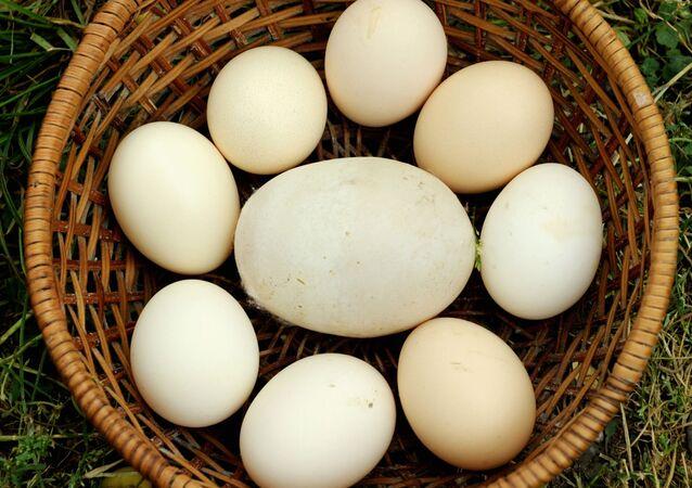 بيضة دجاج عملاقة تزن 170 جرامًا من جورجيا ،دخلت موسوعة غينيس للأرقام القياسية، عام 2010