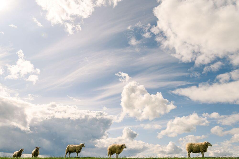 قطيع من الأغنام يقفون تحت الغيوم في ألمانيا، 2 سبتمبر 2019