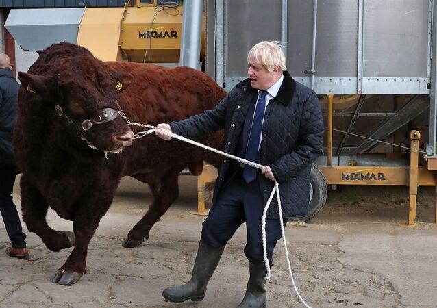 رئيس وزراء بريطانيا بوريس جونسون خلال زيارته مزرعة دارنفورد في  اسكتلندا، 6 سبتمبر/أيلول 2019