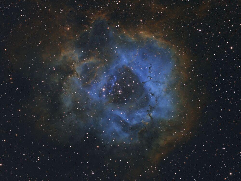 صورة بعنوان زهرة النجوم (Stellar Flower)،  للمصور الهولندي ديفي فان دير هوفن، البالغ من العمر 11 عامًا، الحائز على المركز الأول في فئة التصوير الفلكي للمصورين الفلكيين اليافعيين (YOUNG ASTRONOMY PHOTOGRAPHER OF THE YEAR)