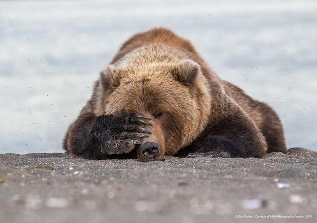 صورة بعنوان كآبة صباح يوم الإثنين، للمصور الأمريكي إيريك فيشر