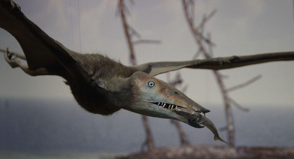 تيروصور