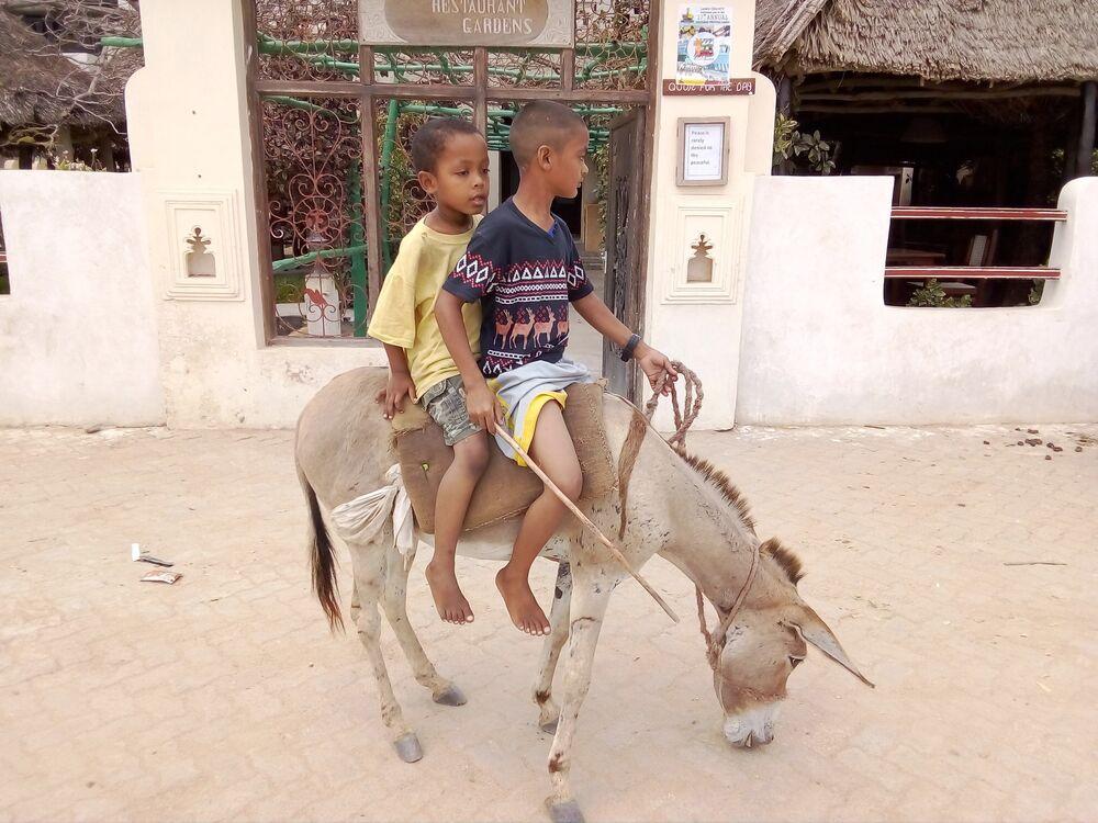 أطفال يركبون حمارا في لامو