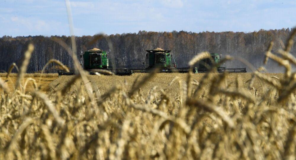 حصاد القمح،