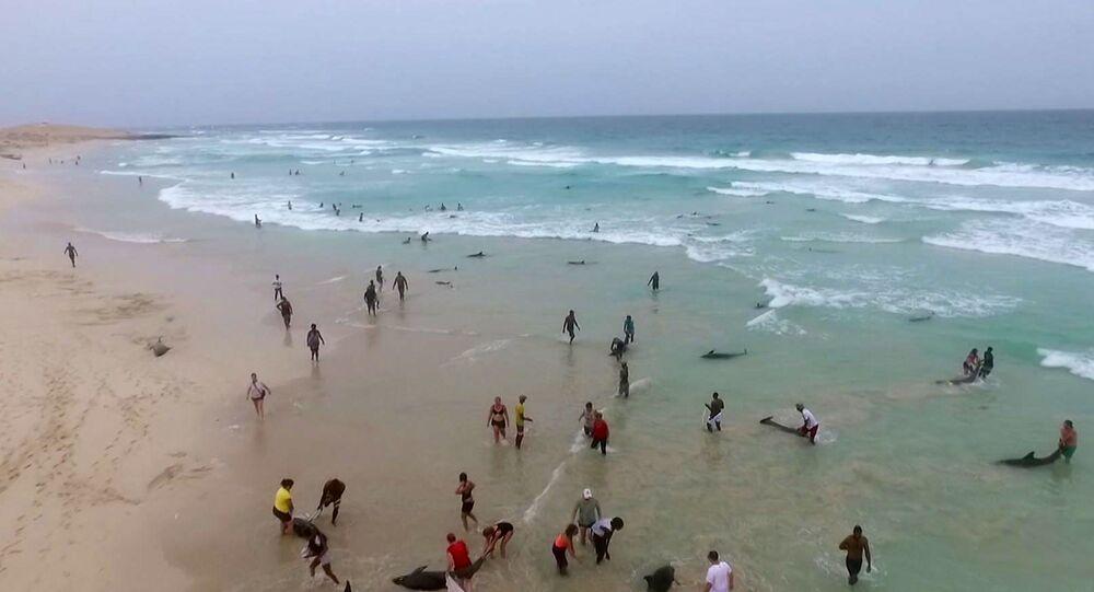 نفوق دلافين على شواطئ المحيط الأطلسي