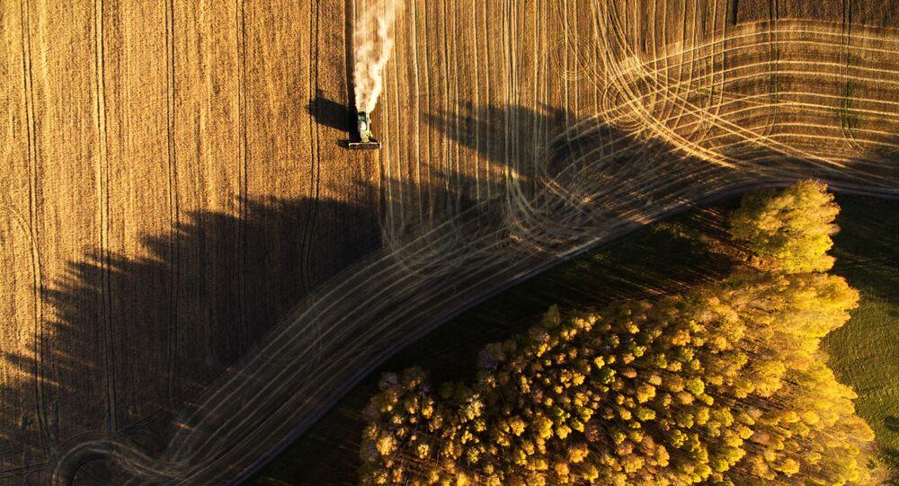 حصاد القمح في حقول مزرعة بوسيفنينسكايا في منطقة نوفوسيبيرسك الروسية