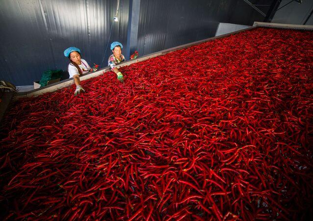 عمال يجقومون بعملية تصنيف الفلفل الأحمر في محافظة غويتشجو، الصين 7 أكتوبر 2019