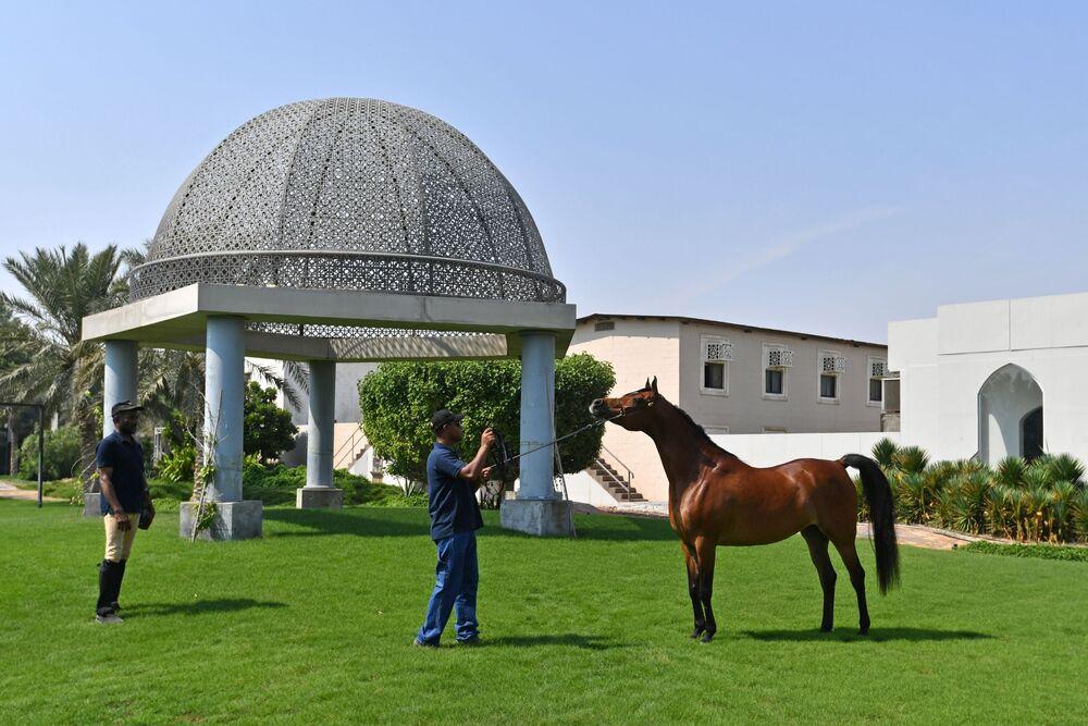 موظفو المزرعة مع الخيول في مدينة الظهران بالمملكة العربية السعودية