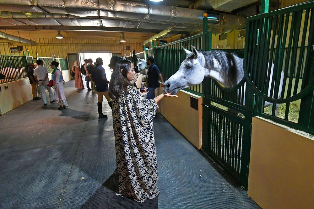 زائرة تطعم الحصان العربي في مزرعة خاصة لتربية الخيول في مدينة الظهران بالمملكة العربية السعودية