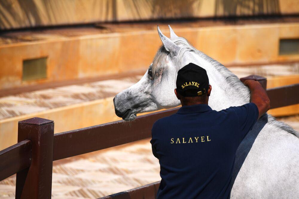 مزرعة تربية الخيول الخاصة بالمملكة العربية السعودية