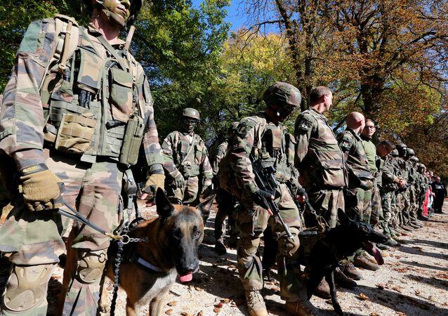 كلاب الجيش