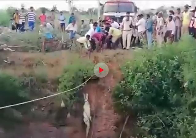 مواطنون ينقذون تمساحا وقع في بئر