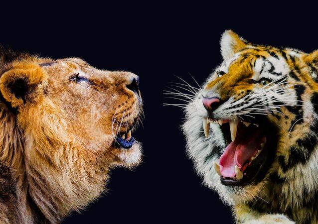 النمر والأسد