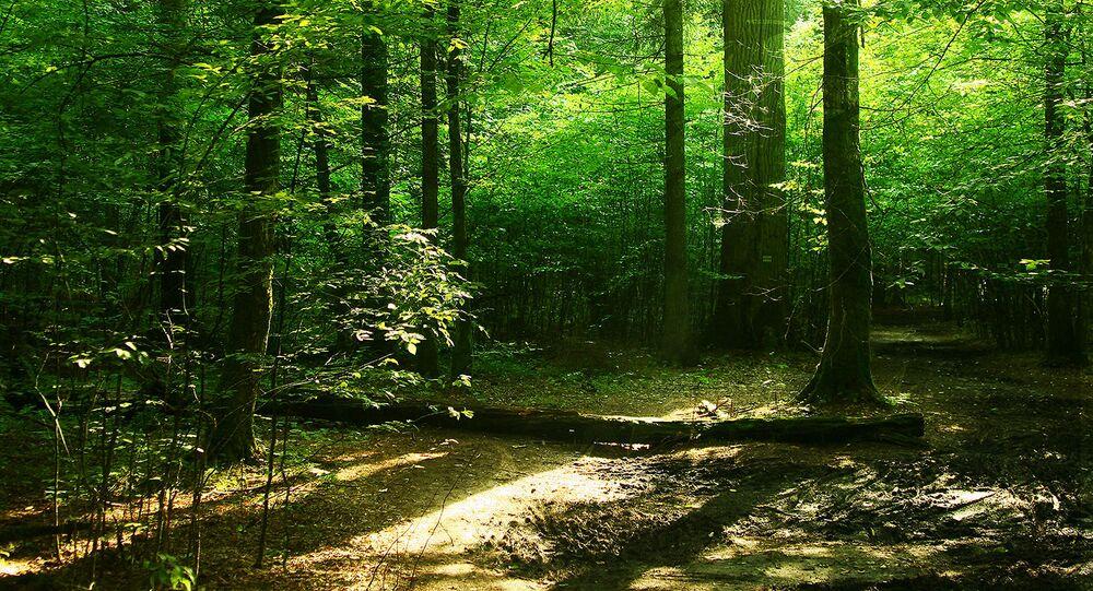 غابة بيلافيجكا، روسيا البيضاء