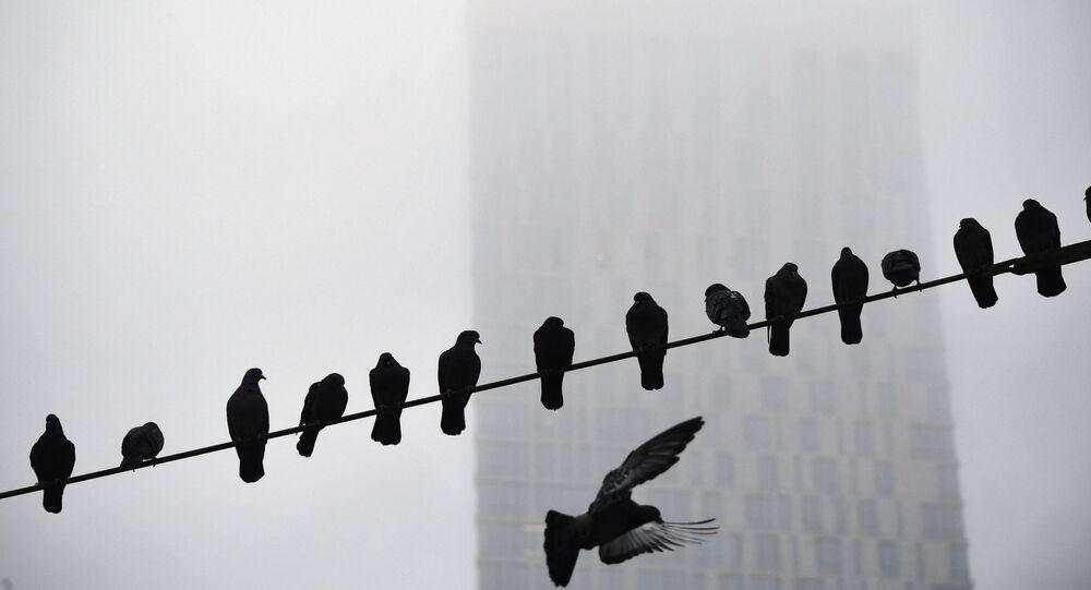 طيور الحمام يجلسون على سلك كهرباء في يوم ضبابي في موسكو، 10 نوفمبر 2019