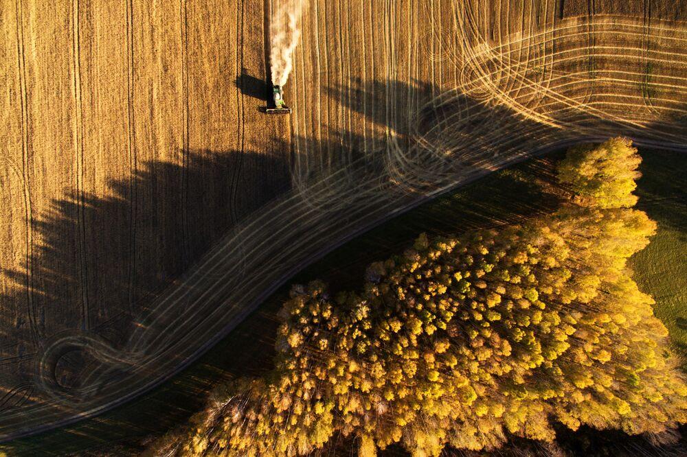 حصاد الحبوب في حقول بوسيفنينسكايا بحي تشيريبانوفسكي في منطقة نوفوسيبيرسك الروسية