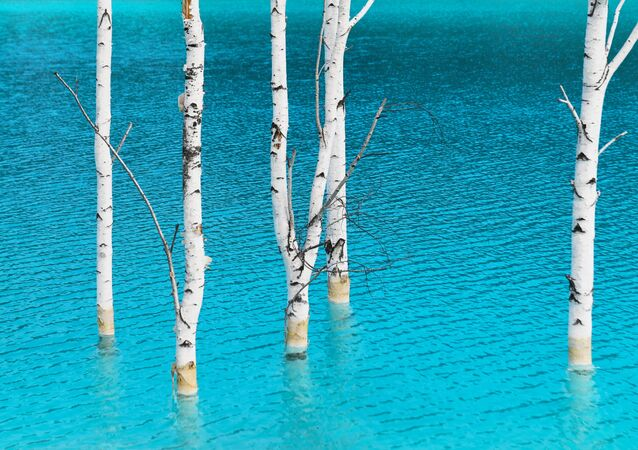 أشجار البتولا في المياه الزرقاء