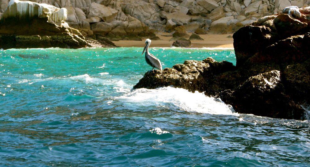شواطئ بحر كورتيس، المكسيك