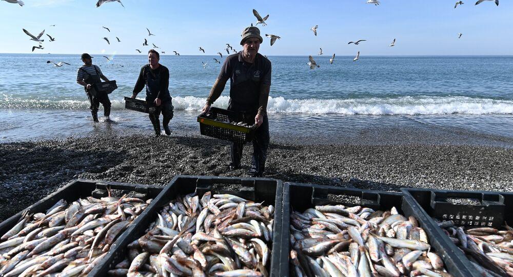 صيادون يفرغون صناديق الأسماك التي اصطادوها في البحر الأسود، روسيا