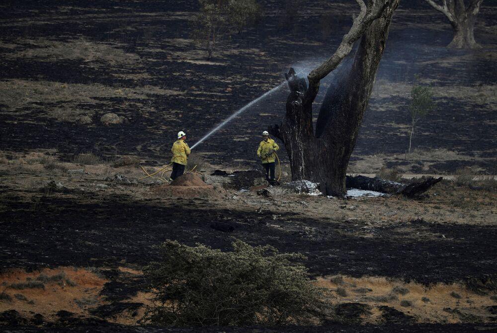 رجال الاطفاء يرشون المياه على شجرة مشتعلة تركت في أعقاب نشوب حرائق الغابات قرب بومبالونغ، نيو ساوث ويلز، أستراليا 2 فبراير 2020.