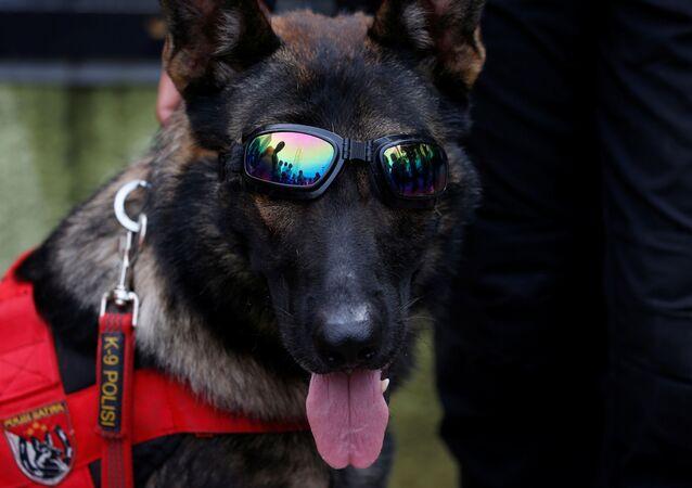 كلب جيش