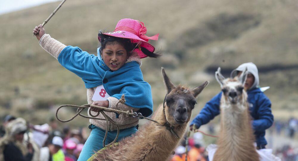 مشاركة في سباق اللاما التقليدية في محمية لانغانات الوطنية، الإكوادور 8 فبراير 2020