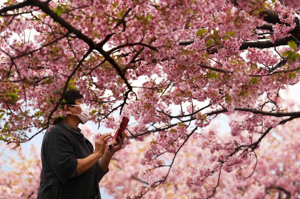 امرأ تلتقط صورة لأزهار شجر الكرز (ساكورا)، خلال مهرجان تفتح أزهار الكرز في ماتسودا، محافظة كاناغاوا، جنوب اليابان 29 فبراير 2020