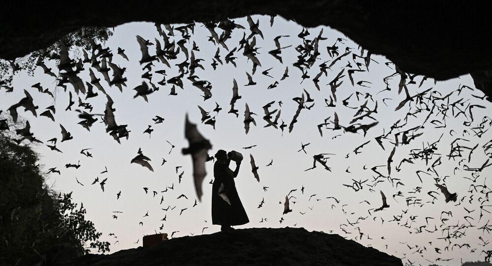 امرأة تبعد الخفافيش بواسطة آلة صوتية عن برج كهرباء في ميانمار 1 مارس 2020