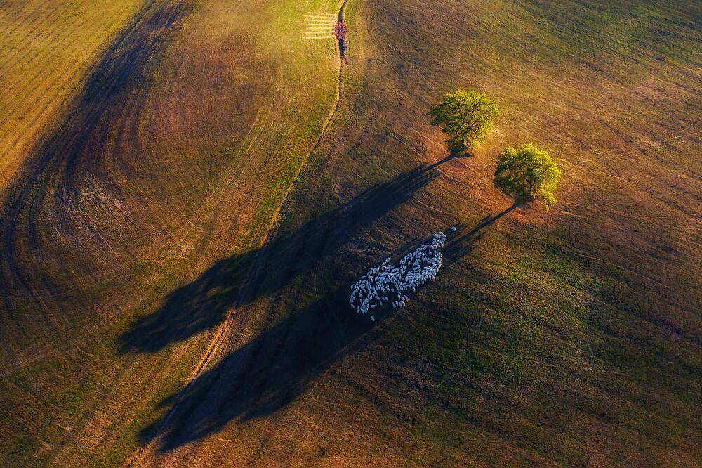 صورة بعنوان صورة جوية، للمصور ماريك بيغالسكي، الفائز في فئة المنظر الطبيعي في  مسابقة مصور TTL للطبيعة لعام 2020