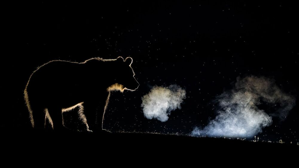 صورة بعنوان التنفس، للمصور بينس ماتيه، الحاصلة على تقدير من لجنة التحكيم في فئة الحياة البرية في  مسابقة مصور TTL للطبيعة لعام 2020