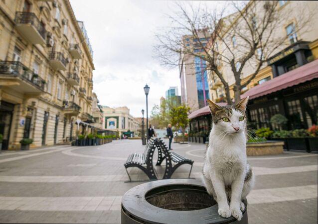 قطة في أحد شوارع مدينة باكو الخالية، وسط الحجر الصحي في أذربيجان 31 مارس 2020