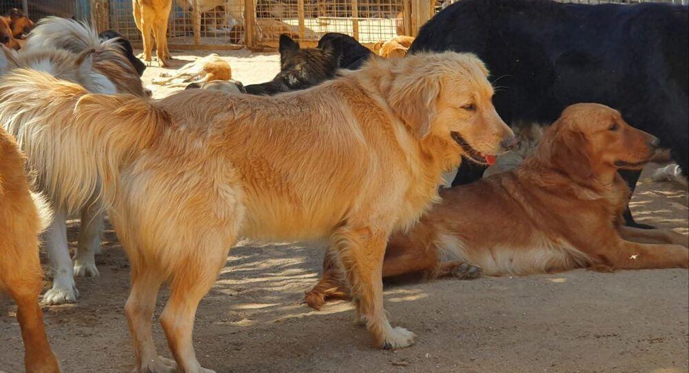 سيدتان مصريتان تستقبلان القطط والكلاب من الشوارع بعد تخلص أصحابها منها