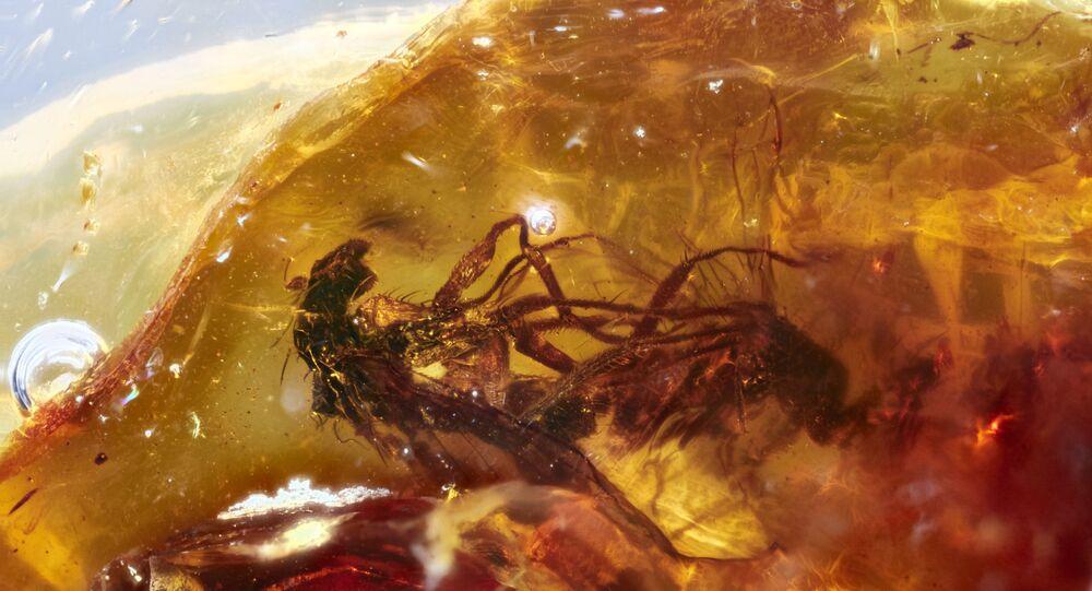 تزاوج بين ذبابتين في الكهرمان