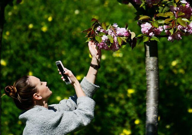 فتاة تصور أزهار الكرز على زقاق بستان الكرز في سوتشي الروسية