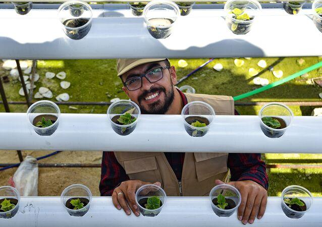شاب سوري ينتج 35 طن خضراوات على سطح أحد الأبنية