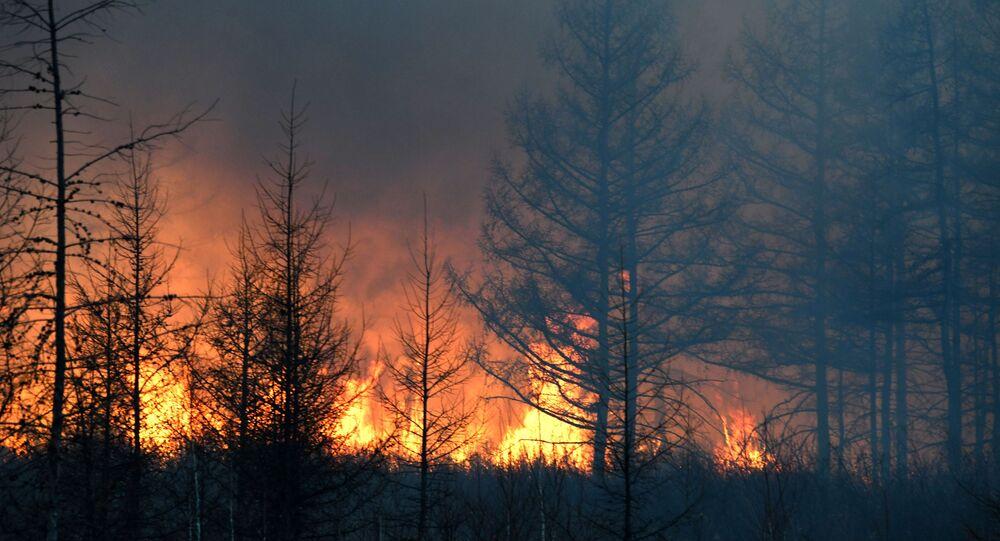 حرق في غابة