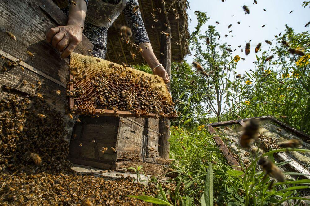 الصورة بعنوان عندما تمتلئ خلايا النحل، للمصور الصيني صان تشياودونغ، الفائز بالمركز الثاني في مسابقة Pink Lady® لأفضل مصور الطعام لعام 2020