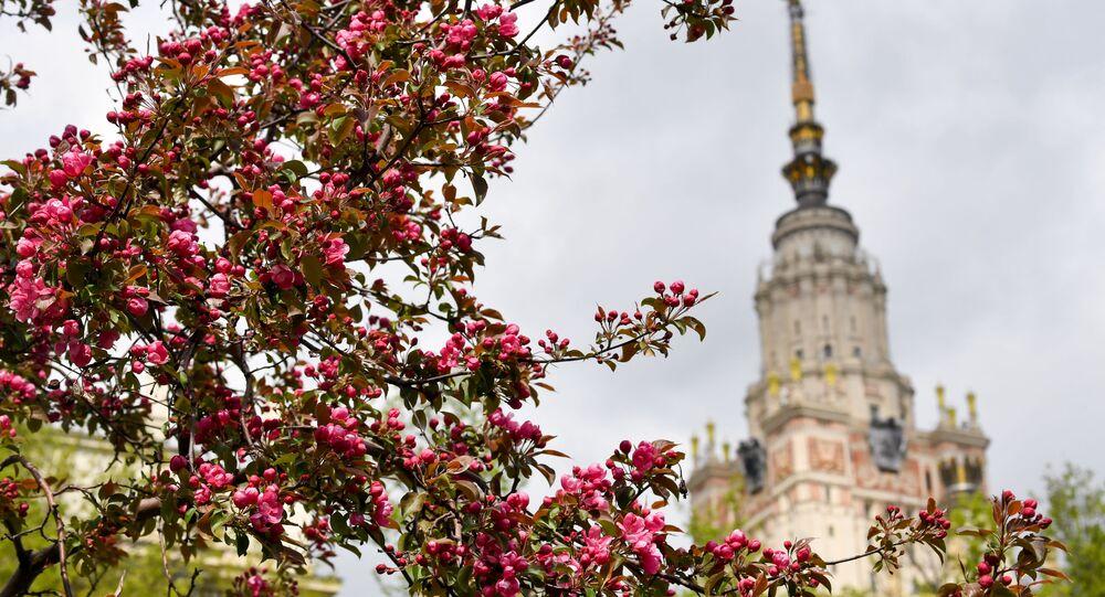 تقتح أشجار التفاح بجانب جامعة موسكو الحكومية في موسكو، روسيا 14 مايو 2020