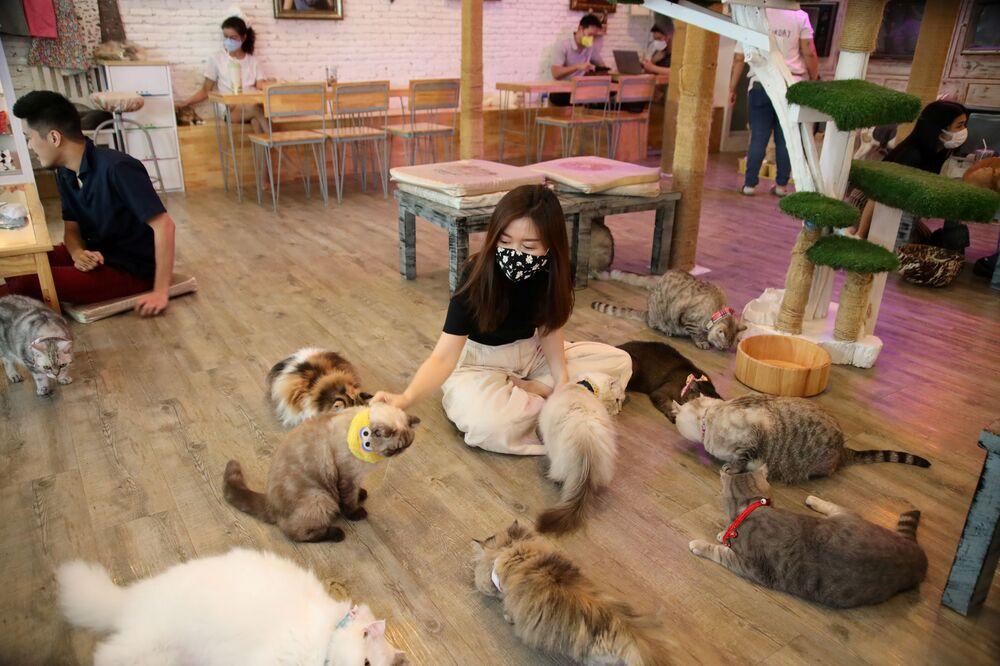 يلعب الموظفون مع القطط لإيجاد الراحة في مقهى - بعد شرعت الحكومة بفتح بعض المطاعم المفتوحة ومراكز التسوق والحدائق ومحلات الحلاقة، خلال تفشي مرض فيروس كورونا (كوفيد-19) في بانكوك ، تايلاند في 7 مايو/ أيار 2020.