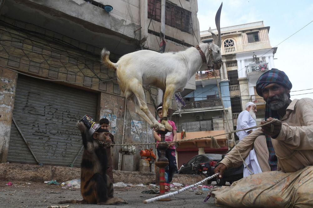 مدرب القرد والماعز خلال عرض في كراتشي، خلال تفشي مرض فيروس كورونا (كوفيد-19) في باكستان ،11 مايو/ أيار 2020