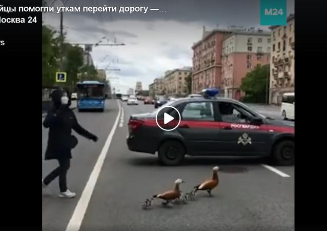 الحرس الروسي يحظر المرور في مركز موسكو من أجل عائلة البط
