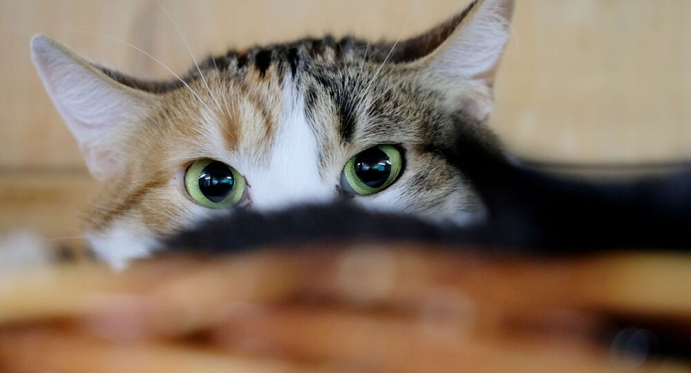 قطة في مأوى للحيوانات